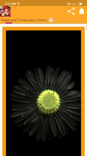 Download Fondos de Flores 4k For PC Windows and Mac apk screenshot 1