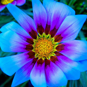 Another pretty flower in my neighbors garden :) by Anne LiConti - Flowers Single Flower (  )