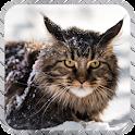 Maine Cat Wallpaper icon