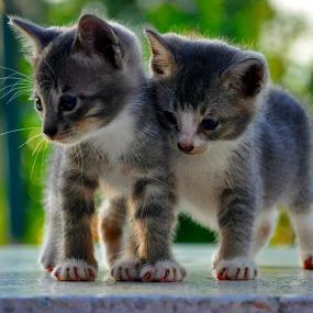 loveee by Nydzam Ahmad - Animals - Cats Kittens