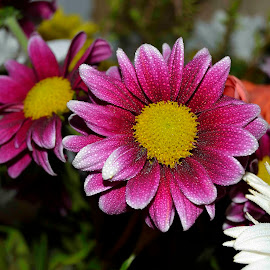 Colours by Richard Booysen - Flowers Flower Gardens ( pink, white, yellow, petals, flower )