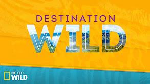 Destination WILD thumbnail