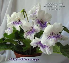 Photo: DS-Днепр
