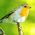 Birds Songs and Calls icon