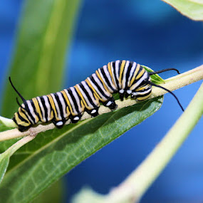 Crawly Critter by Shelly B. - Animals Other