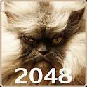 20 48 Cats Puzzle icon