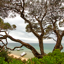 Tree At The Cliff by Steven De Siow - Nature Up Close Trees & Bushes ( seaview, seascape, bush, tree, nature up close,  )