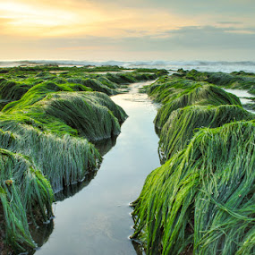 the gren hairy by KooKoo BreSyanatha - Landscapes Sunsets & Sunrises
