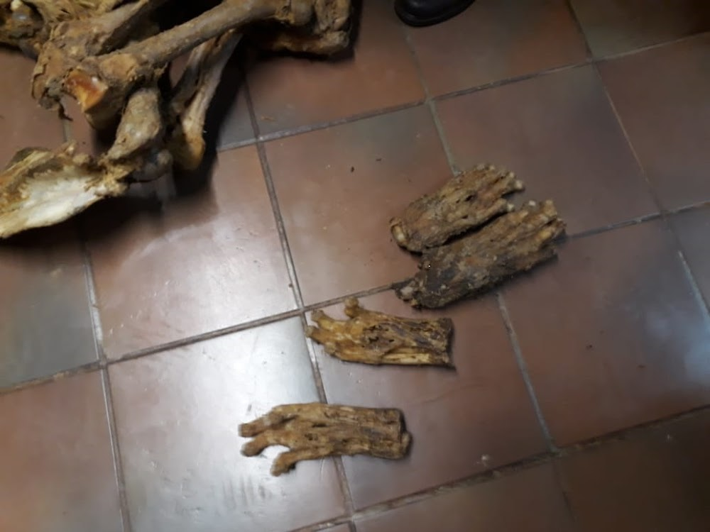 Four more arrested for alleged lion bone trade