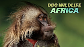 BBC Wildlife: Africa thumbnail