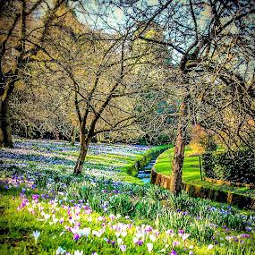 Spring is here! by Sam Kirimli - Flowers Flowers in the Wild