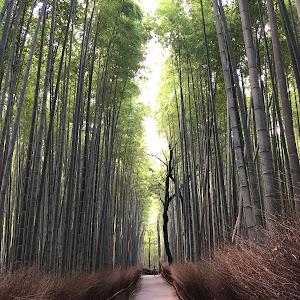 ゴルフ7 GTIのカスタム事例画像 ちび太さんの2020年09月23日19:24の投稿