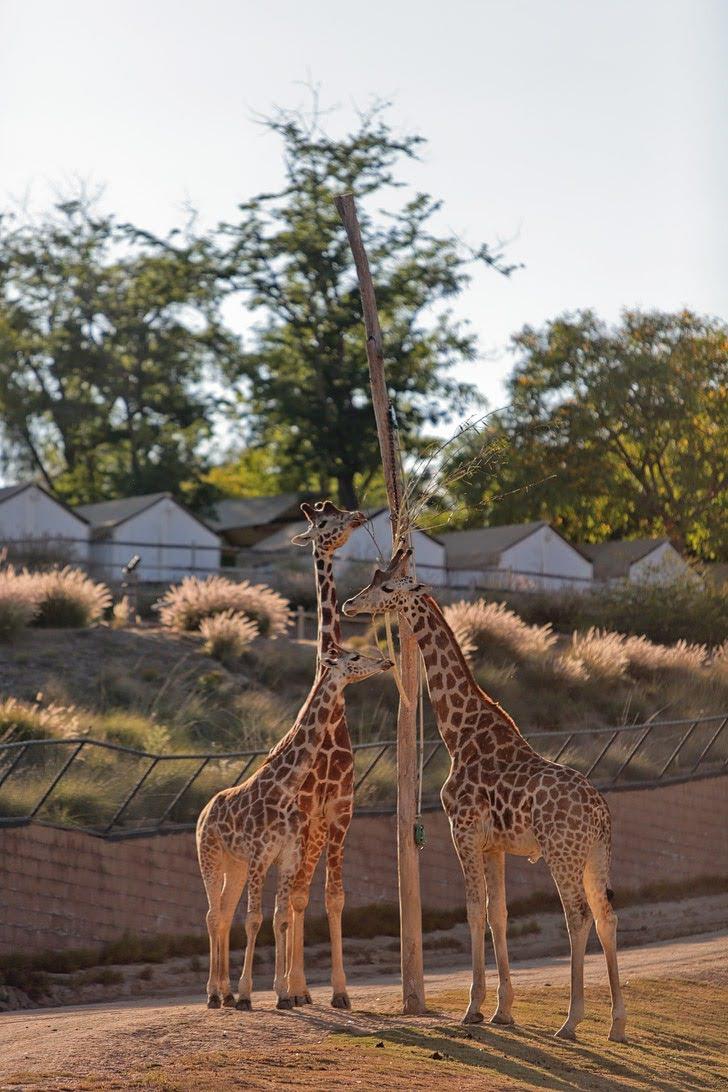 San Diego Zoo Safari Park.