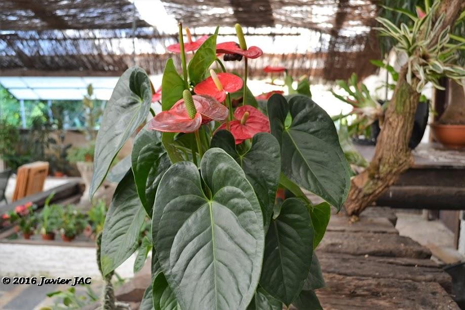 Foto Jardín botánico Fundación Sales 3