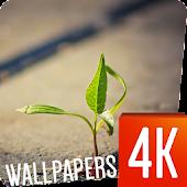 Plants Wallpapers 4k