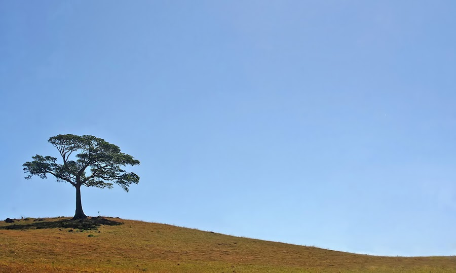 Top of the Hill by Raymond Pauly - Nature Up Close Trees & Bushes ( hill, sky, tree, blue, grass, green, landscape )