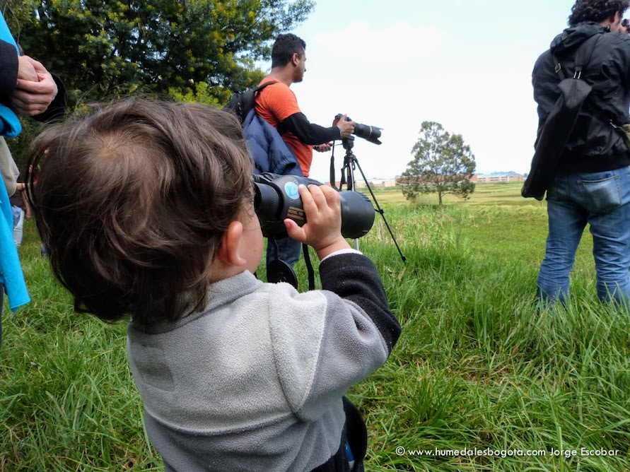 Niño observando aves