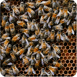 Bees 3D file APK Free for PC, smart TV Download