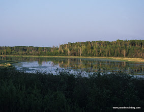 Photo: Cold Lake Provincial Park, eastern Alberta's boreal forest