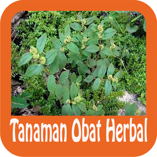 Tren Untuk Nama Tanaman Herbal