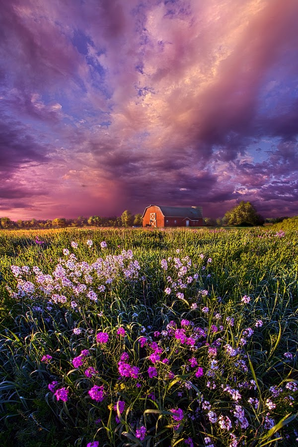 Songs of Days Gone By by Phil Koch - Landscapes Prairies, Meadows & Fields ( vertical, arts, fine art, travel, yellow, storm, love, sky, nature, weather, light, trending, colors, twilight, art, mood, journey, horizon, rural, portrait, country, dawn, environment, season, serene, popular, outdoors, lines, natural, hope, inspirational, canon, wisconsin, ray, joy, landscape, sun, photography, life, emotions, dramatic, horizons, inspired, clouds, office, hdr, purple, heaven, camera, beautiful, scenic, living, morning, lilacs, field, unity, blue, sunset, peace, meadow, summer, beam, sunrise, earth )