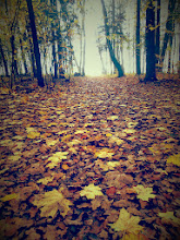 Photo: listopadowy...