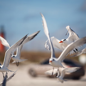 seagulls by Debi Henry - Animals Other ( blue sky, sunny, busy, beach, birds )