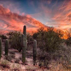Diagonals by Charlie Alolkoy - Landscapes Deserts ( clouds, sky, desert, sunset, suculent, arizona, tucson, sunrise, saguaro, cactus, sonoran )