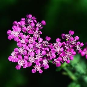 by John Berry - Flowers Single Flower