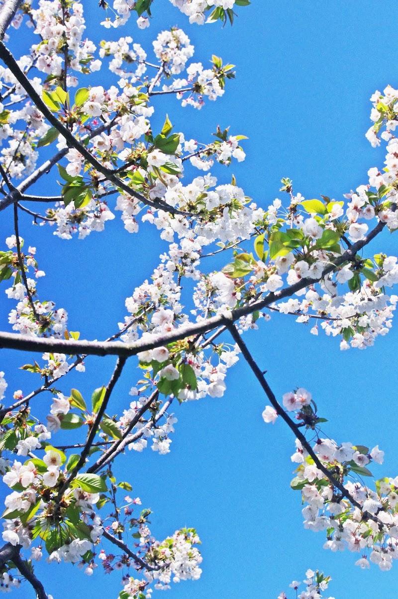 La primavera arriva sempre. di micphotography