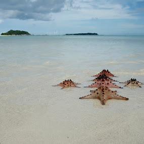 by Pablo Indra Iskandar - Animals Sea Creatures