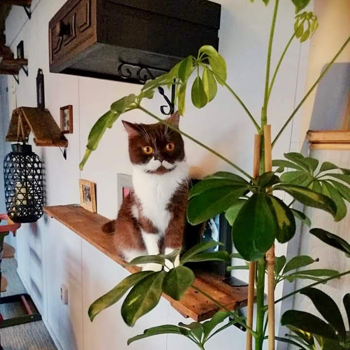 kattencafe-almere
