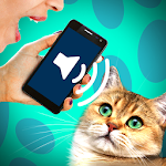 Cat translator audio joke Icon