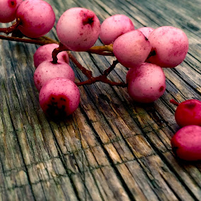 Pink beauties by Eirin Hansen - Nature Up Close Other plants