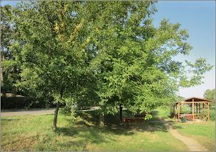 Photo: Corcoduși (Prunus cerasifera) - din zona Str. Constructorilor, dig Mr.3 - 2017.07.23