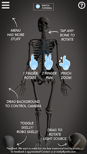 Skelly MOD (Cracked): Poseable Anatomy Model 2