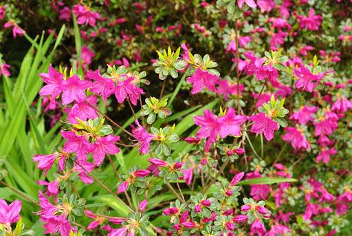 Fleurs dans le jardin de Gondremer