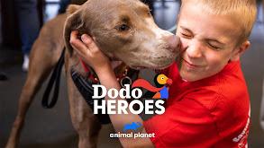 Dodo Heroes thumbnail