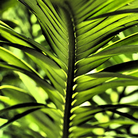 by Jonathan Williams - Nature Up Close Leaves & Grasses