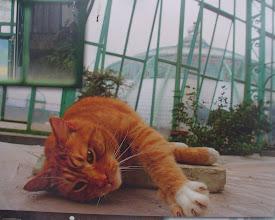 Photo: Il gatto del re