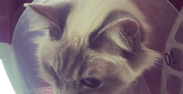 Aisleyne Horgan-Wallace's cat taken into emergency hospital