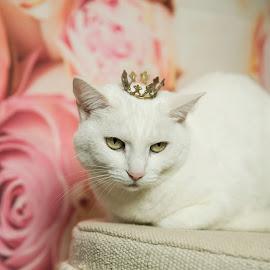unamused by Trish Beukers - Animals - Cats Portraits ( princess, cat, tiara, boss, cranky )