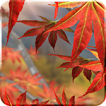 Autumn Tree Watch Face Icon