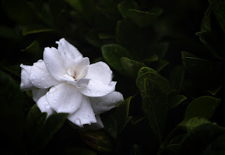 """Photo: """"I see your face in every flower....."""" Ray Noble"""