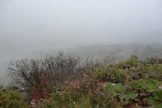 Photo: Eine Woche später, next stop: Volcan Poas. Da unten befindet sich angeblich der Vulkankrater, aber...