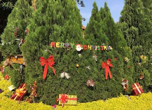 Photo: Joulu tulossa myös kesäiseen maisemaan