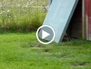 Video: Tigger and Franklin