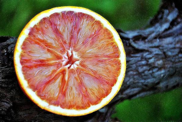 Arancione di Luciano Fontebasso