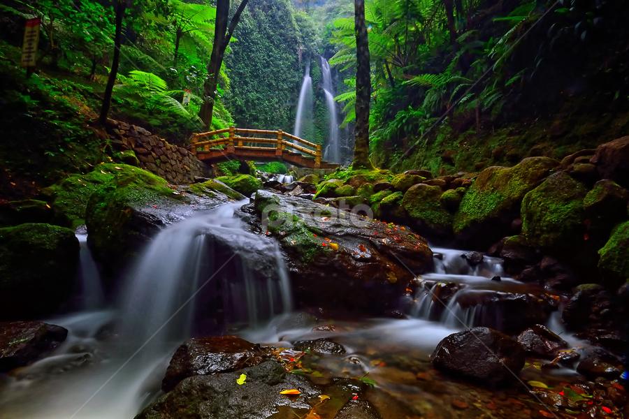 The Lost Paradise by Hendri Suhandi - Landscapes Travel ( tree, jungle, waterfall, forest, java, travel, karanganyar )
