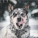 Let It Snow Dog - Instagram Post item